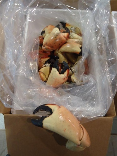 5LB Colossal Florida Stone Crabs (1-2 Claws per LB)